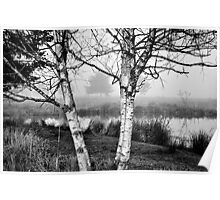 Late November Birches Poster