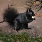 Black Squirrel by Elaine  Manley