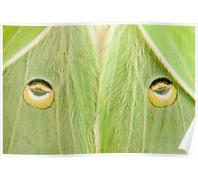 "Luna Moth close-up...""The Stare"" Poster"
