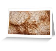 Red fox rough fur texture cloth  Greeting Card