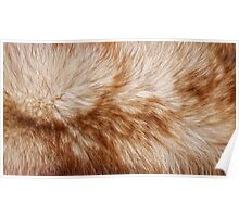 Red fox rough fur texture cloth  Poster