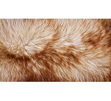 Red fox rough fur texture cloth  Photographic Print