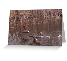 Aggressive Canadian Geese Greeting Card