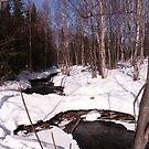 Backyard Winter by yakkphat
