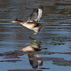 Running On Water by byronbackyard