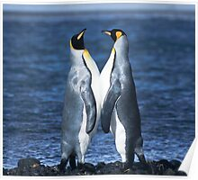 King Penguins, Heard Island Poster