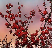 Sprigs of Winterberries by Corinne Noon