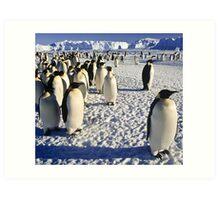 Emperor Penguins, Antarctica Art Print