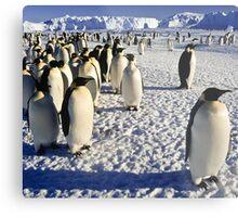 Emperor Penguins, Antarctica Metal Print