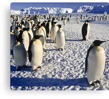Emperor Penguins, Antarctica Canvas Print