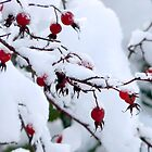 rosehips in snow by tego53