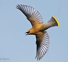 On The Wing by PixlPixi
