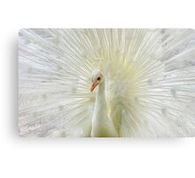 The White Peacock Canvas Print