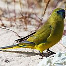 """""""Parrot on the Beach"""" by Sue  Fellows"""