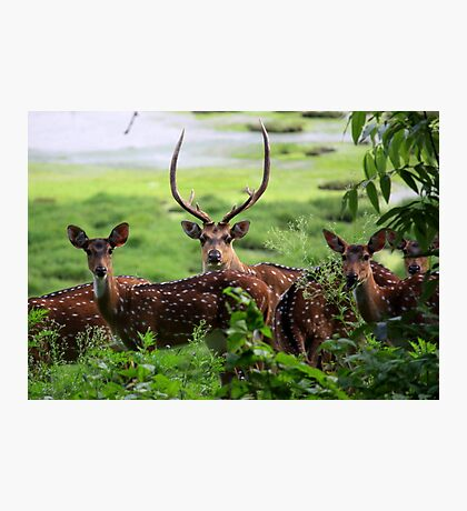 Oh! Deer, They Spotted Me! Photographic Print