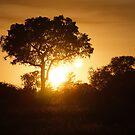 Lumiere d'Afrique by Sophie Gonin