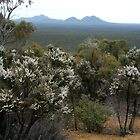 Stirling Ranges WA Australia by Lyn Fabian