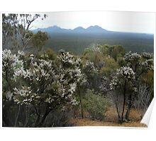 Stirling Ranges WA Australia Poster