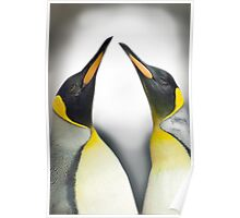 """Cool Affection"" - King Penguins Poster"