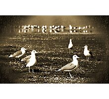 Lake Vacation: Great-Grandpa Seagull Family Portrait  Photographic Print