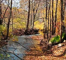 Golden Woodland Stream, Ozark Mountains by NatureGreeting Cards ©ccwri