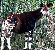 Awesome Okapi by cute-wildlife