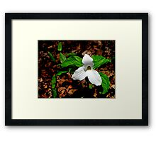 Trillium In Browns  Framed Print
