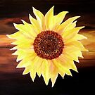 Sunflower'... by Valerie Anne Kelly