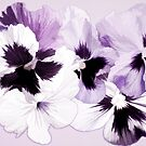 Purple Pansies'... by Valerie Anne Kelly