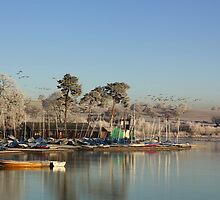Canadian Geese over Bittel Reservoir by scoff