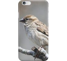 House sparrow perched on branch iPhone Case/Skin