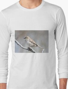 House sparrow perched on branch Long Sleeve T-Shirt