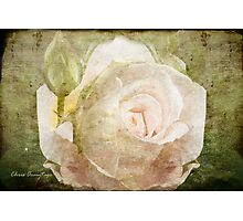 Tribute to a Rose Photographic Print