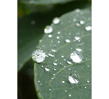 Water droplet on leaf Photographic Print