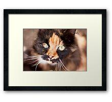 Furry Bokeh Framed Print