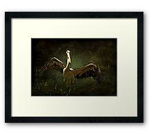 """Glorious Pelican ..."" Framed Print"