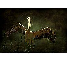 """""""Glorious Pelican ..."""" Photographic Print"""