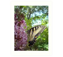 Tiger Swallowtail on Clerodendrom Art Print