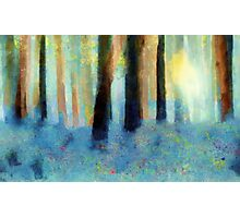 Bluebell Wood'... Photographic Print
