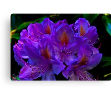 Rhodedendrum Flower Canvas Print