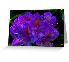Rhodedendrum Flower Greeting Card