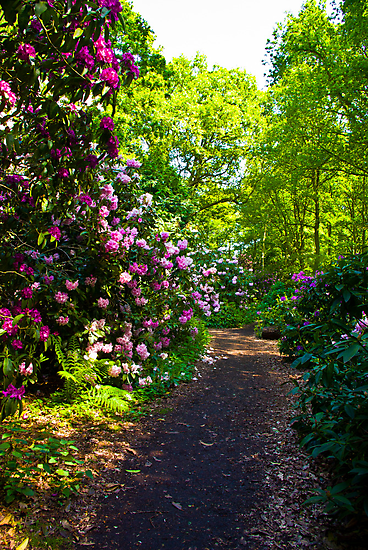 Flower Path by Trevor Kersley
