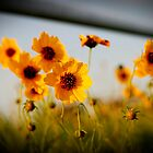 Wildflowers by Angi Allen