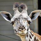 Happy Giraffe by SuddenJim