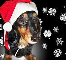 Merry Christmas Dachshund by Caroline Hannessen