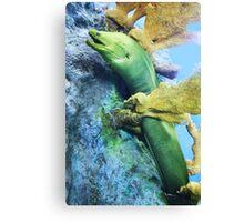 Green Moray  Canvas Print