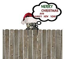 cat on fence wishing merry christmas Photographic Print