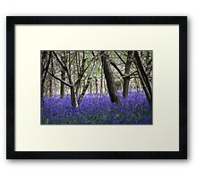 The Bluebell Wood Framed Print