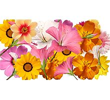 flower layout Photographic Print