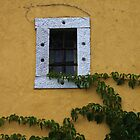 Vine and a Window by Karen  Rubeiz